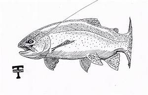 Trout Sketch Templates