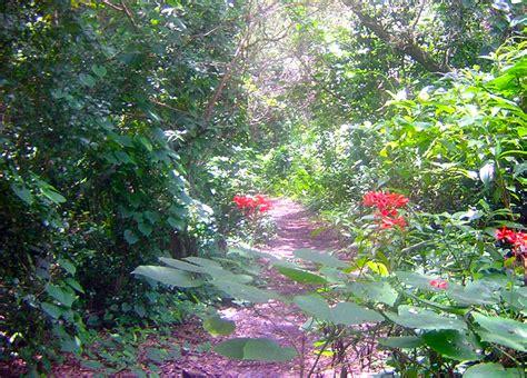 kendall indian hammocks park florida hikes