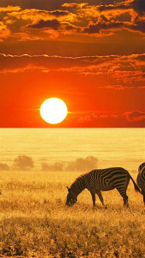 african savannah sunset wallpaper