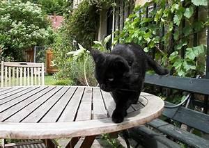 katzen vertreiben im garten mit katzenschreck With französischer balkon mit katzen aus garten vertreiben