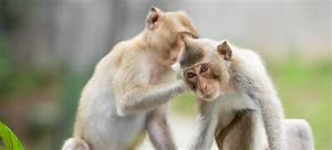 60 Interesting Monkey Facts Fun Facts About Monkeys