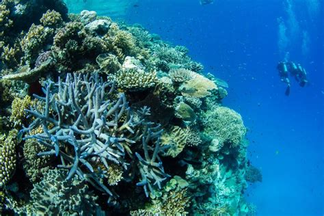 Passions of Paradise - Great Barrier Reef Tours Cairns | QLD Travel