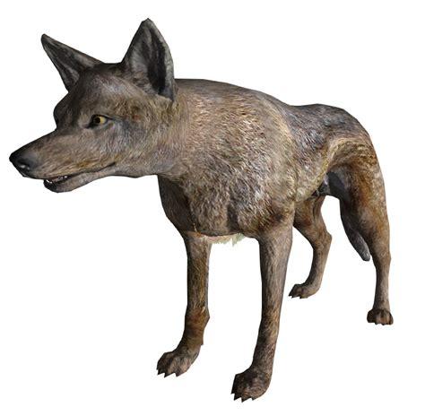 coyote fallout  vegas fallout wiki fandom