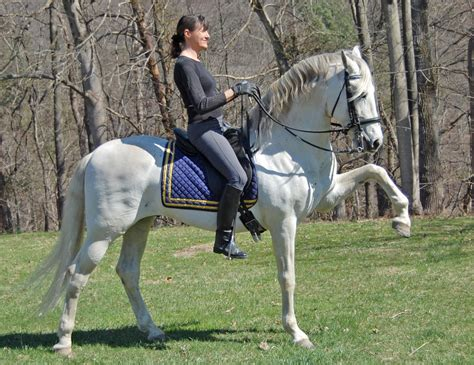 spanish walk andalusian granito stallion horse lightness performing collection training