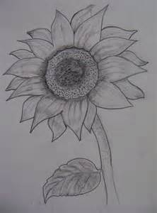 Pencil Sketch Flower Drawing