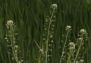 Stickstoffmangel Bei Pflanzen : pflanzen vielfalt der saatgut shop stauden samen beet ~ Lizthompson.info Haus und Dekorationen