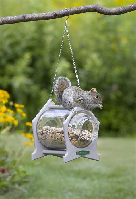 mangeoire pour ecureuil infos idees  conseils utiles