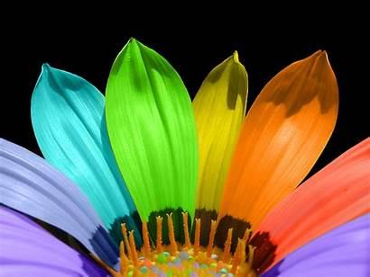 Multicolor Petals Desktop Pc Wallpapers Mac Close