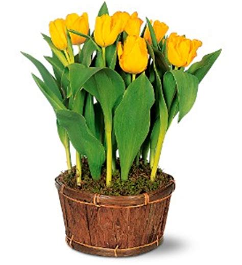 plants delivery raleigh nc raleigh florist