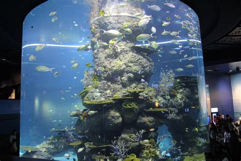 behold the wonderful world at s e a aquarium singapore