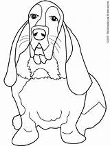 Hound Coloring Dog Beagle Bassett Basset Dogs Printable Coon Drawing Miniature Schnauzer Adults Adult Sheets Colouring Pattern Printables Getcolorings Getdrawings sketch template