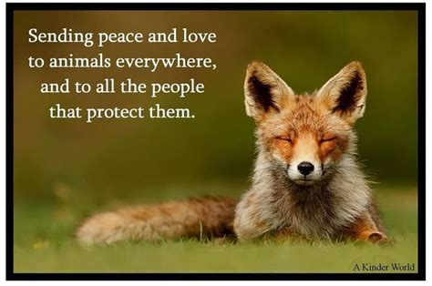 Image result for beautiful animal quotes