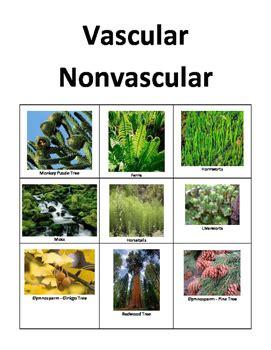 plant classification  paris brannen teachers pay teachers