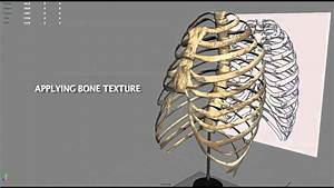 3d Modeling Of A Rib Cage