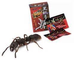 jual obat africa black ant jamu kuat lelaki sejati