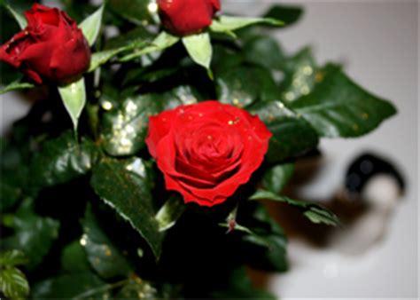 Weitere ideen zu rubinhochzeit, rubinhochzeit geschenk, hochzeit. Glückwünsche zur Rubinhochzeit