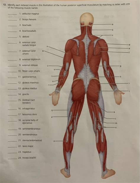 Alexis has trouble accessing my torso muscle revision skill and then closes the skill app and she does it with all three of the aps. Muscle Names / Human Anatomy Muscle Names Human Body ...