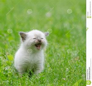Cute Baby Grey Kittens Images Of - Litle Pups