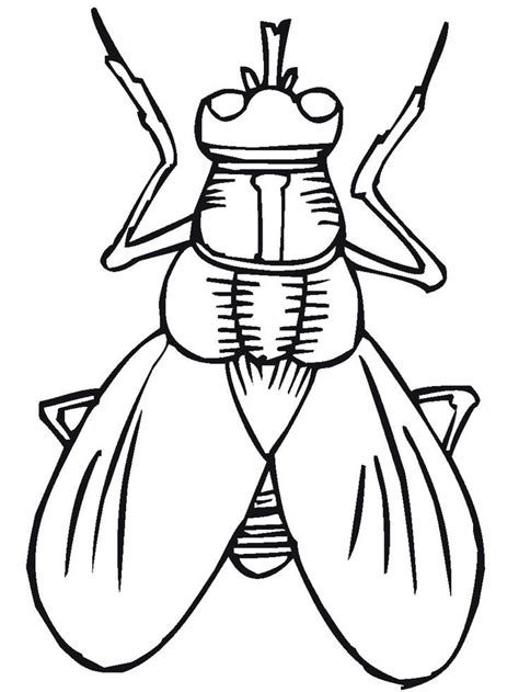 printable bugs bug insect coloring pages