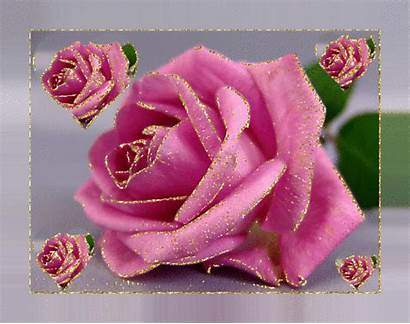Glitter Graphics Flowers Guller Gifs Flores Aynur