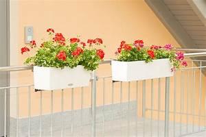 Balkonkasten Halterung Geländer : balkonkastenhalterung balkonkasten halterung halte vario fix ~ Watch28wear.com Haus und Dekorationen