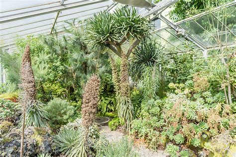 Botanischer Garten Erlangen by Botanischer Garten Erlangen Fotos Botanischer Garten