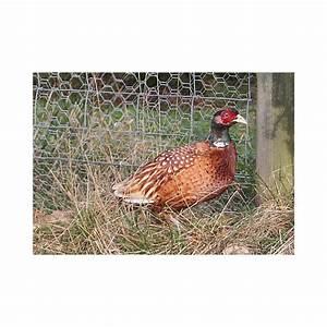 Grillage A Poule Bricomarche : grillage galvanis poules volaille lapins m 40mm ~ Dailycaller-alerts.com Idées de Décoration