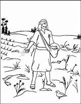 Coloring Parable Seed Mustard Sower Lessons sketch template
