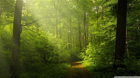 Green Forest Photo Hd by Beautiful Nature Image Green Forest 4k Hd Desktop