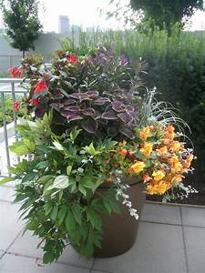 Container plant ideas landscape tropical with bold colour