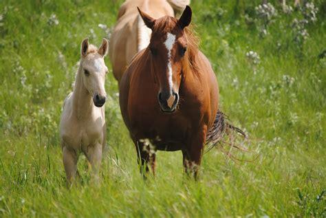 registered quarter horses born june