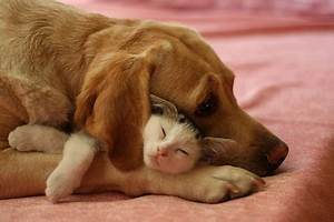 Friendship Between Cats and Dogs - Love Meow