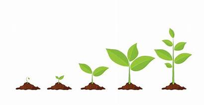 Growing Plant Grow Clipart Tree Planting Sprout