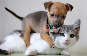 cats and dogs along 35 pics