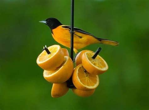 erva spike orange  suet feeder bird houses