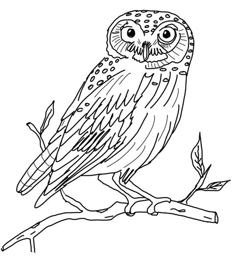 HD wallpapers animal coloring pages free