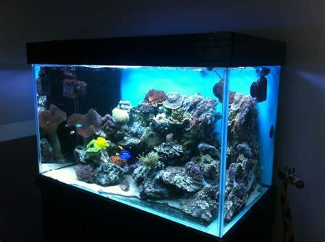 aquarium eau de mer complet pas cher aquarium eau de mer complet pas cher 28 images aquarium eau de mer temp 233 rature aquarium