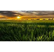 Nature Landscape Green Sun The Field Sky Clouds Background