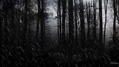 Dark Oscuro Bosque Forest Wallpapers Abstracto Rainy