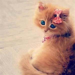Kittens: So Cute it Hurts! | Cute overload - BabaMail