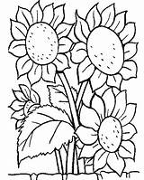 Sunflower Coloring Pages Sunflowers Printable Flower Disney Colouring Sheets Flowers Sheet Drawing sketch template
