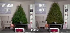 Weihnachtsbaum Wasser Geben : lustige videos und witzige filme auf cartoonland de ~ Bigdaddyawards.com Haus und Dekorationen