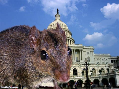 Bid Bid Big Mouse Pictures Freaking News