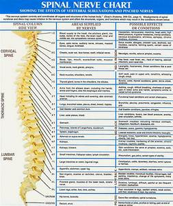 Is Your Posture Effecting Your Nerves