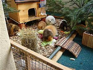Meerschweinchen Gehege Ikea : meerschweinchen auf dem balkon wie nagerforum schweiz ~ Orissabook.com Haus und Dekorationen