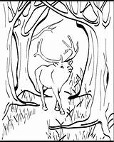 Elk Coloring Pages Animals Animal Sheet 04kb 753px sketch template