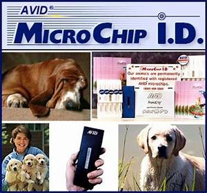 avid microchip id for your dog With avid dog