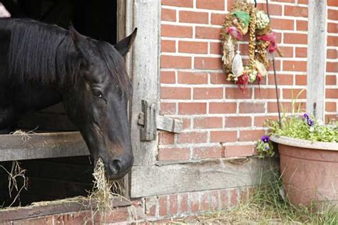 Reiturlaub Lüneburger Heide Mit Eigenem Pferd