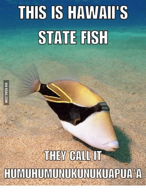 Hawaii Memes - 25 best memes about funny hawaii jokes funny hawaii jokes memes