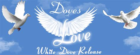 Wedding Doves   Funeral Doves   Dove Release   Palm Coast